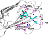 Paclitaxel binding to human MD2 protein
